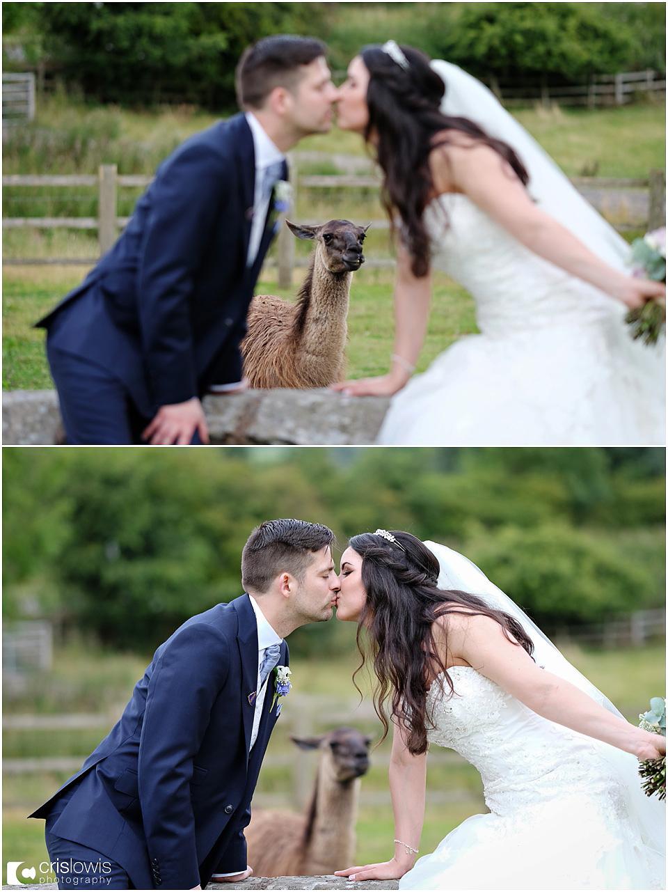 weston hall lamas wedding photo