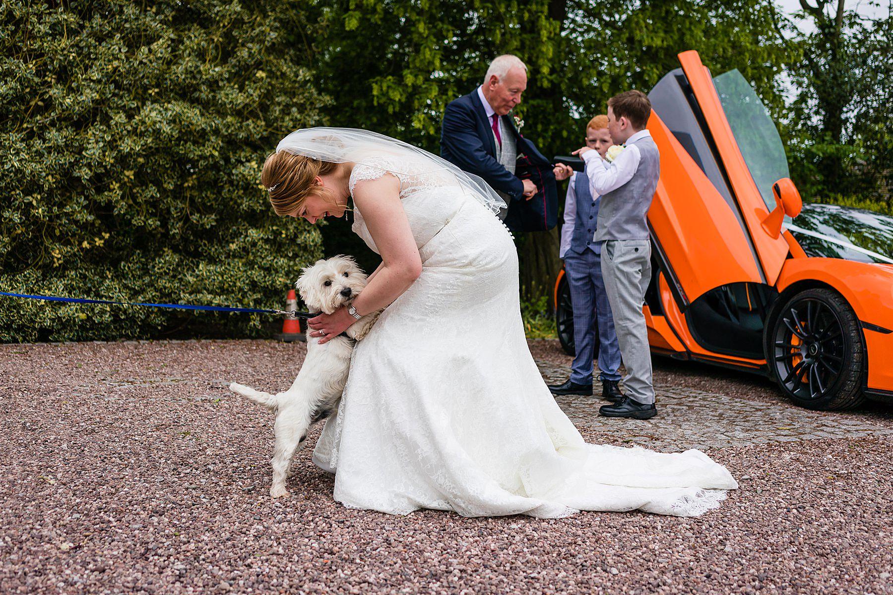 brides dog
